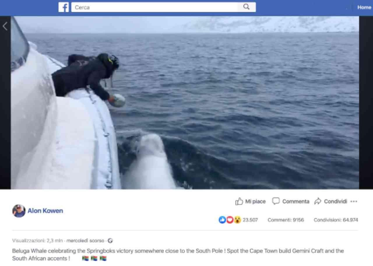 facebook-beluga-rugby